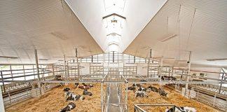 robotic dairy barn